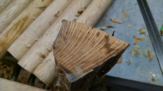 Live oak end grain